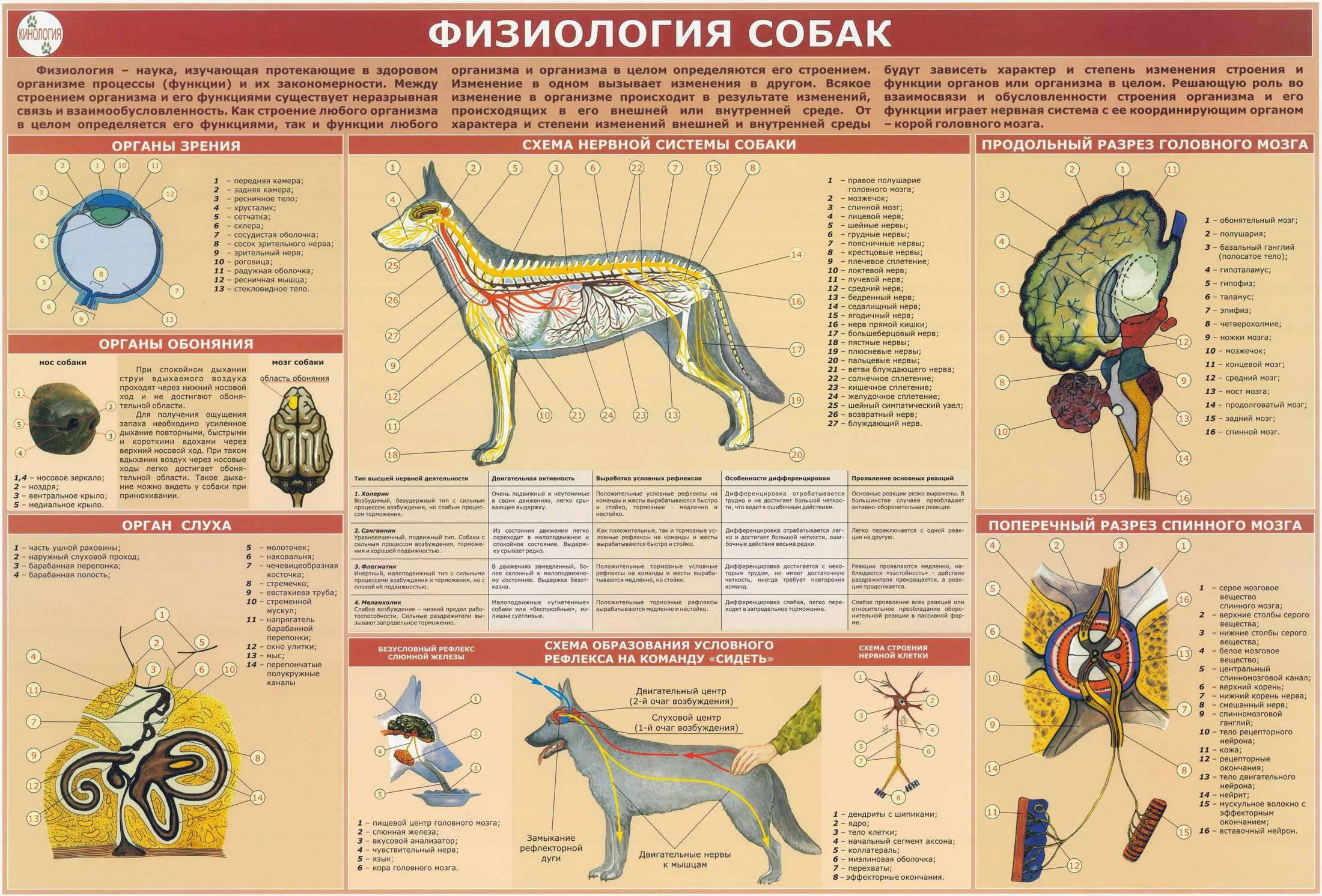 атлас по собакам в картинках
